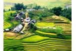 Sapa - Can Cau - Bac Ha Market Tour (start On Friday From Hanoi) (3D/4N)